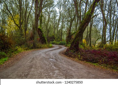 Winding trail in the forest