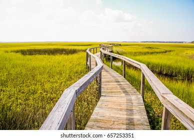 Winding Wooden Boardwalk In Wetlands With Lush Swamp Grass In Florida