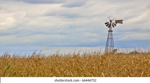 windmill corn field