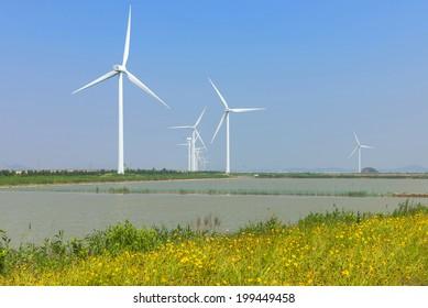 Windmill Lakes Flowers