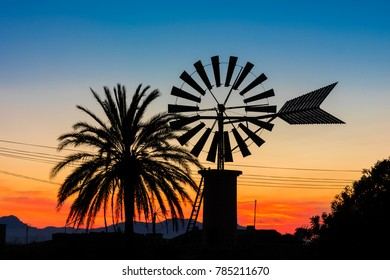 Windmill and Palm Tree on Countryside in Mallorca Spain at Sunset