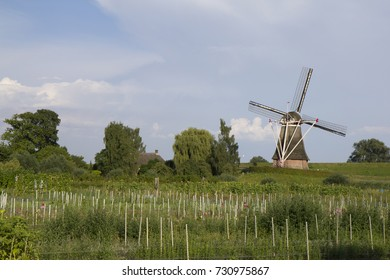 Windmill in Waardenburg, built around 1780 and traditionally used to mill wheat. This windmill stands in a fine location near the summer dike of the Waal river.
