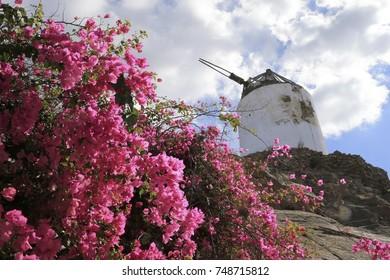 Windmills and Flowers in Mykonos Greece