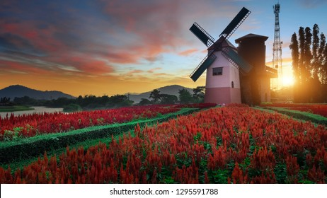 Windmills and flowers in the park at sunset time