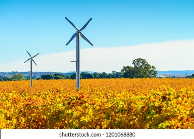 Windmills in Riverland vineyard, rural South Australia