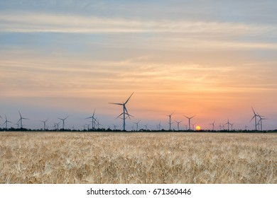 Windmills in a wheat field at dawn