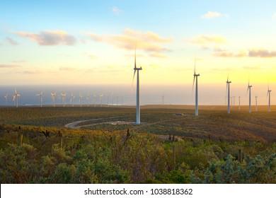 Windmills at wind farm, Coquimbo Region, Chile