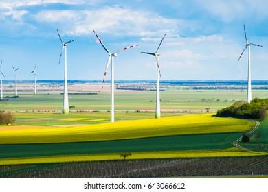 Windmills in yellow rape seed field, wind turbunes in nature