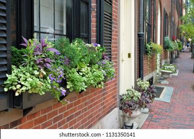 Window box in Beacon Hill, Boston