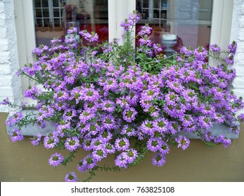 Window box floral arrangement