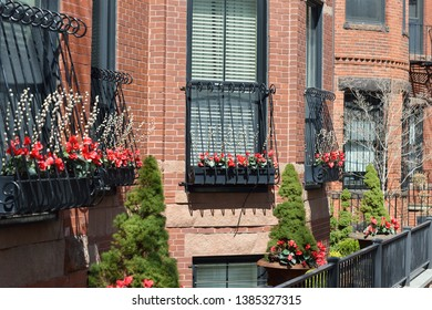 Window box and garden urn decoration with bright red flowers of cyclamen and pusy willow branches.