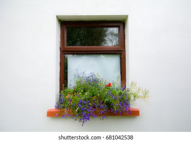 Window box with lobelia, daisies and geraniums