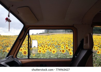 Window of a camper van and yellow sunflower field