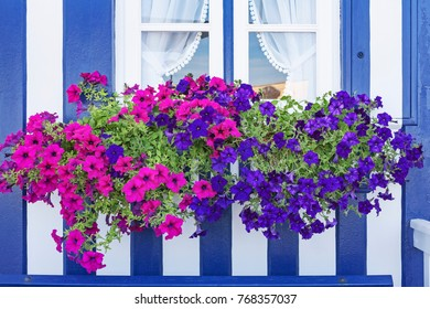 Window with colorful flowers in a wooden house with blue and white stripes, at Costa Nova in Aveiro, Portugal