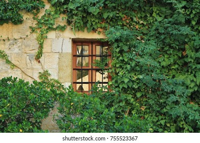window covered with greenery