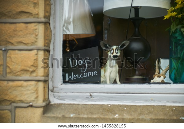 Window with 'Dogs Allowed' sign next to a pot dog.