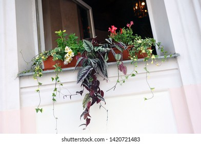 Window Flower box with beautiful blooming flowers. Decor and interior