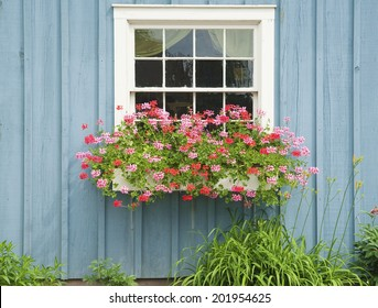 Window Flower box with beautiful blooming flowers