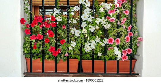 Window with flowers on a white wall