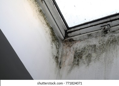 window with mold and moisture