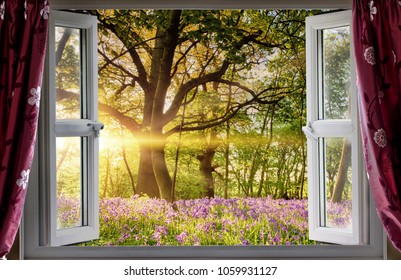 Window open onto bluebell forest woodland sunrise in the morning light. Fresh landscape view from indoors.