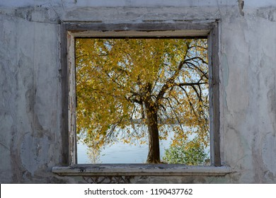 Window opening in an old abandoned bilding witrh a view to an autumn tree and a lake.