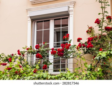 window with roses