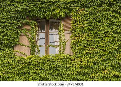 Window with Vine on Wall in Ville-Dommange, France.