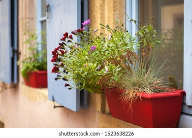 Window and wooden shutters decorated with colorful fresh flowers in Colmar. Window flowerpot with beautiful blooming flowers.