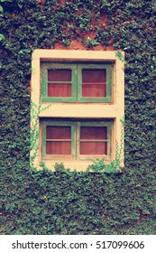 windows covered with ivy.