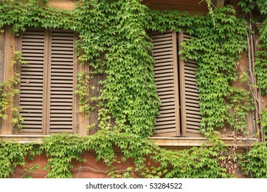 Windows and ivy - in Rome, Italy