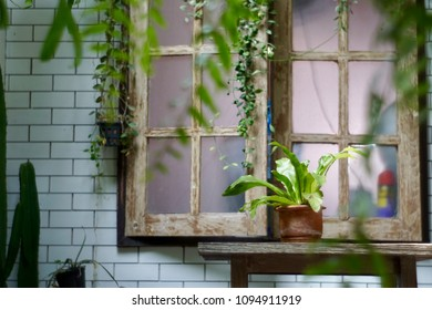 windows with nature