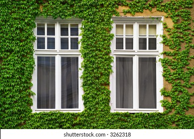 Windows on an old house covered with ivy
