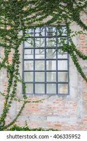 Windows on the Wall Which is Covered With Ivy