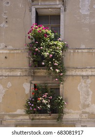 windows (one above the other) with flowers
