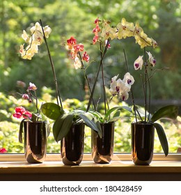 Window-sill and plant pots with Moth Orchids or Phalaenopsis with glassreflections and trees in background outdoors - square