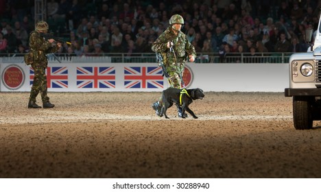 WINDSOR - MAY 13: Explosives sniffer dog demonstrates with its controller during the Windsor Royal Tattoo in Windsor, May 13, 2009