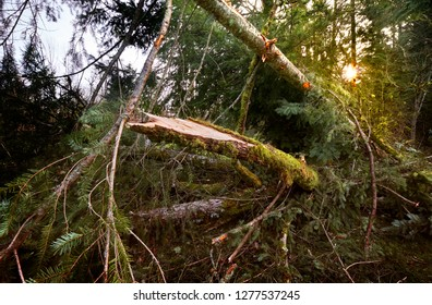 Windstorm brought down trees and branches overnight leaving a garden impassable in the morning