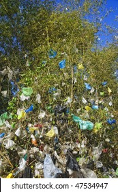 Wind-strewn plastic garbage cling to bamboo tree