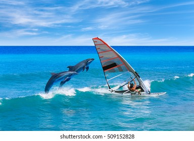Windsurfing and dolphin
