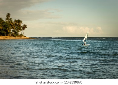 Windsurfing sail by the sea at sunset with palm trees in the background in Praia do forte, Bahia, Brazil