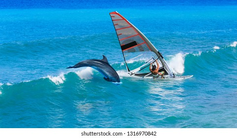 Windsurfing sails on the blue sea and wave with dolphin