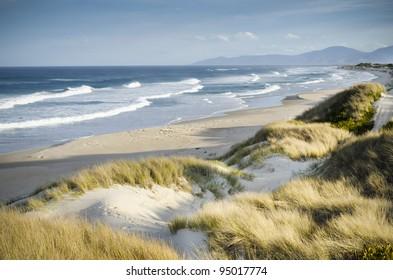 Windswept beach. Marouard Beach, Tasmania, Australia