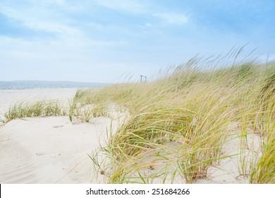 Windswept beach, typical Cape Cod coastal environment.