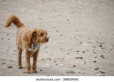Windswept Dog at Beach