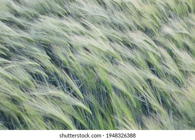 Windswept field with plants and weed