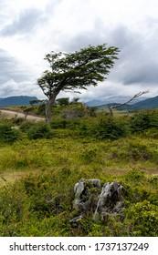 Windswept landscape of Patagonia near Ushuaia, Argentina.