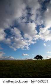 Windswept stunted tree on farm grassland field in rural Hampshire against a cloudy sky