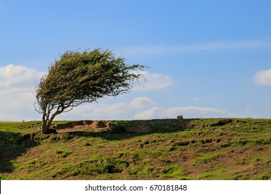 Windswept Tree and Rabbit on a Hillside