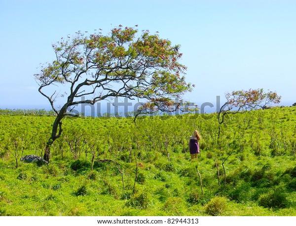 Windswept Trees in Maui Hawaii